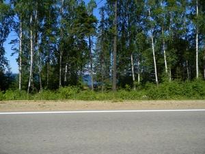 Машины и палатки за деревьями